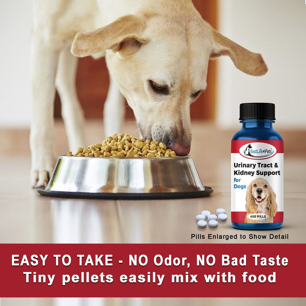 Dog Urinary Tract Infection Medicine