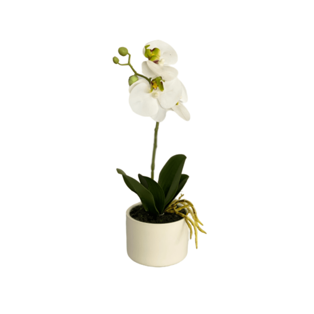 cozy-furniture-home-decor-artifical-plants-butterfly-small-orchid-plant