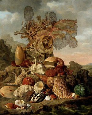 Still Life with Shells and Seaweed - Venus Art Prints