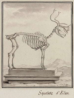 Elk Skeleton - Venus Art Prints
