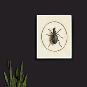 Green Beetle - Venus Art Prints
