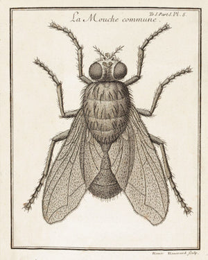 House Fly - Venus Art Prints