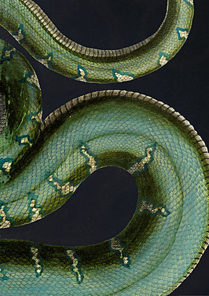 Green Boa - Venus Art Prints