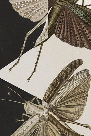 Contrasting Insects - Venus Art Prints