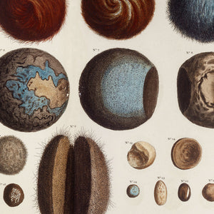 Natural History Curiosities - Venus Art Prints
