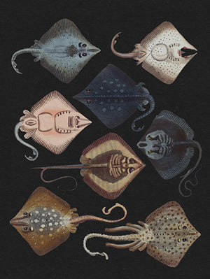 Stingrays - Venus Art Prints
