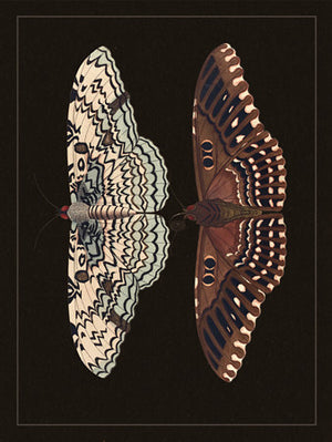 Pair of Moths - Venus Art Prints