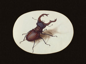 Stag Beetle - Venus Art Prints