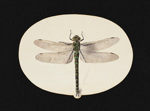 Dragonfly - Venus Art Prints