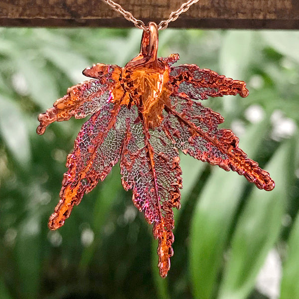 Japanese Maple Autumn Copper Leaf