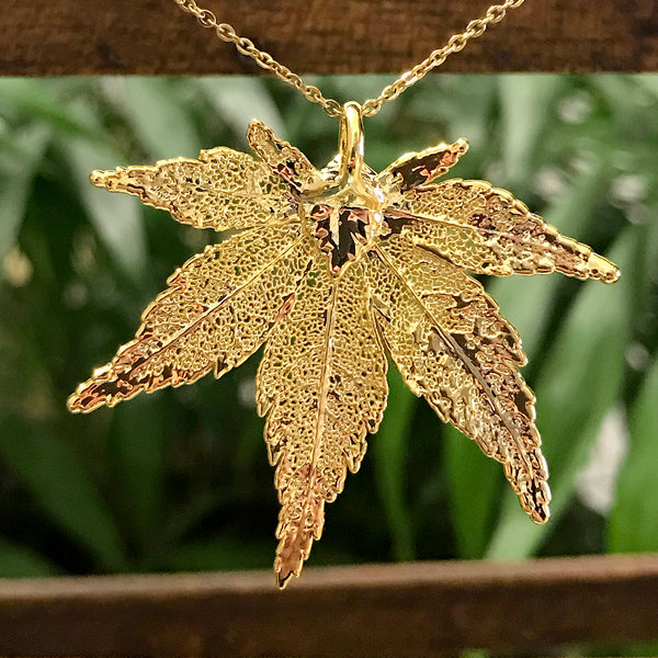 Japanese Maple Gold Plate Leaf