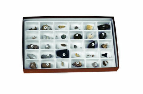 American Educational 30 Piece Advanced Fossil Collection