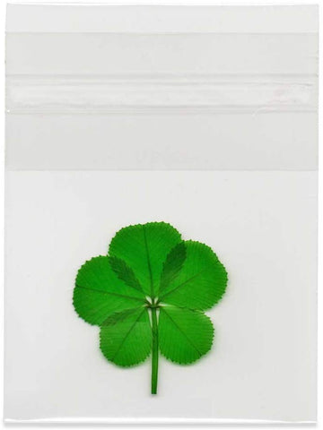 Clovers Online Genuine Preserved 5-Leaf Clover In Cello Sleeve