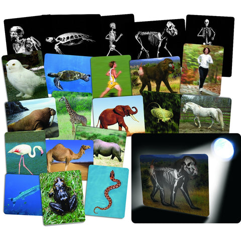 "Roylco R-59250 What'S Inside Animals Card Set Grade Kindergarten To 1, 0.4"" Height, 8.6999999999999993"" Wide, 10.9"" Length"