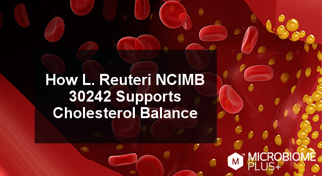How L. Reuteri NCIMB 30242 Supports Cholesterol Balance