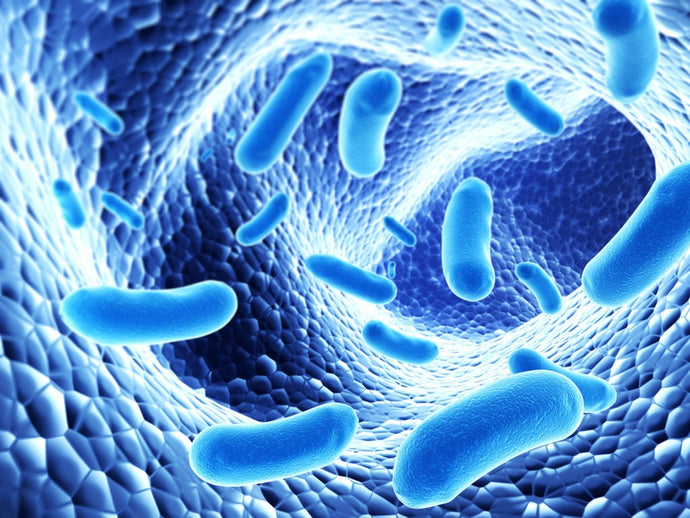 Ultimate Guide to Microbiome Reboot in Under 30 Days