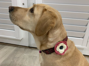 Mimi Green - Poppy Dog Collar Flower