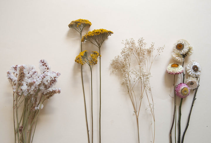 DIY Dried Flowers: A List of our Favorites + How to get Started