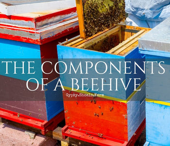 The Components of a Bee Hive & Their Functions for the Colony