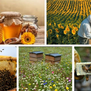 Gypsy Shoals Farm Apiary Opens This Month