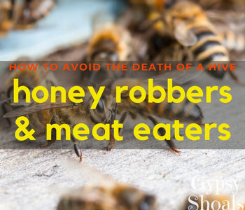How to Prevent Honey Robbers & Meat Eaters in Beehives