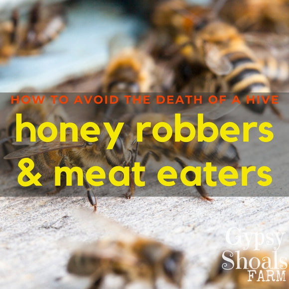 honey robbers and meat eaters wasp and yellow jacket beekeeping solutions