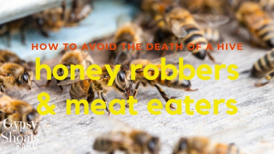 3. how to prevent honey robbing wasps and yellow jackets beekeeping