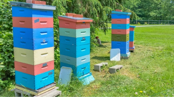 examples of langstroth beehives