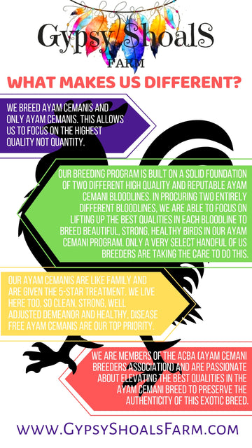 gypsy shoals farm ayam cemani breeder what makes us different standard of excellence infogram