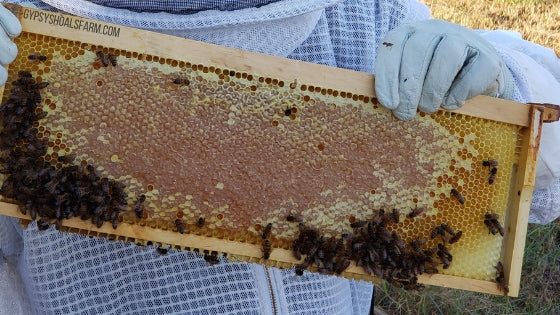honey frame from beehive honey super gypsy shoals farm