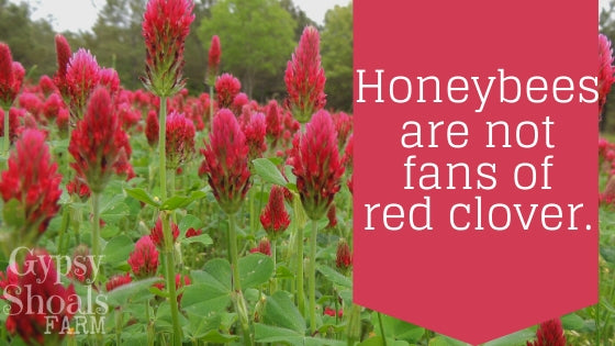 red clover and honey bees beekeeping education