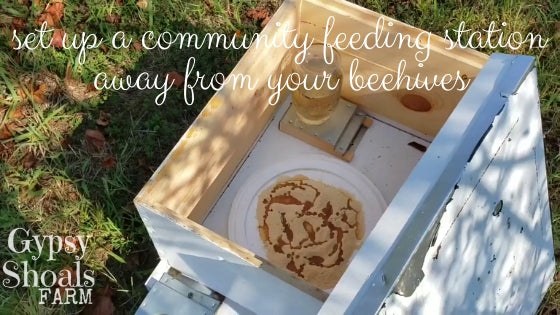 set up a community feeding station away from your beehives
