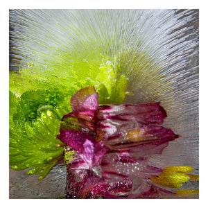 'Lime Punch' - Frozen Flowers