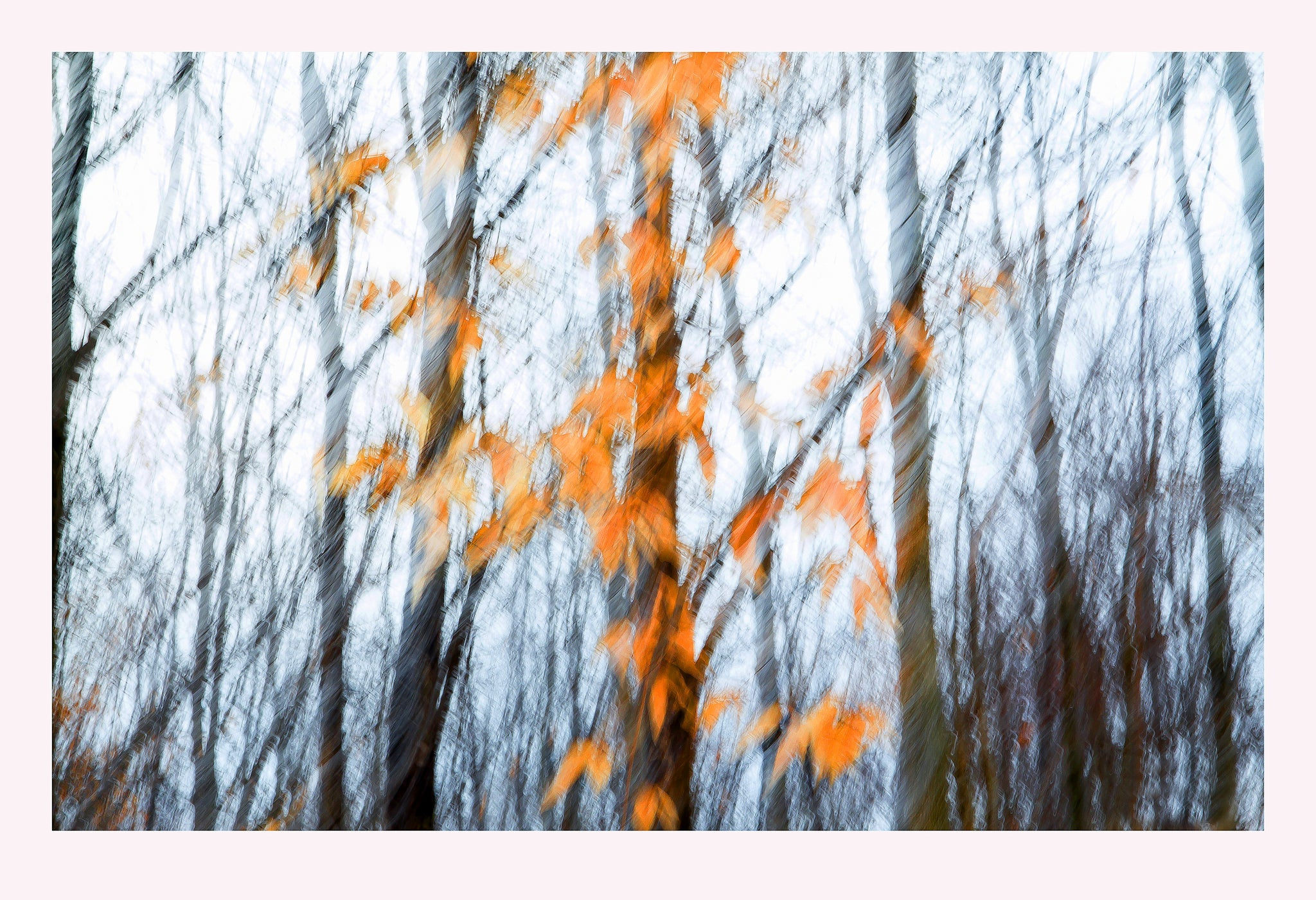 'Autumn Wind' - Intentional Camera Movement