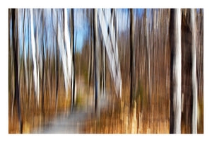 'Birch Trail' - Intentional Camera Movement