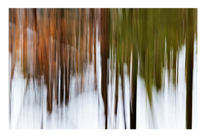 'Changing Seasons' - Intentional Camera Movement
