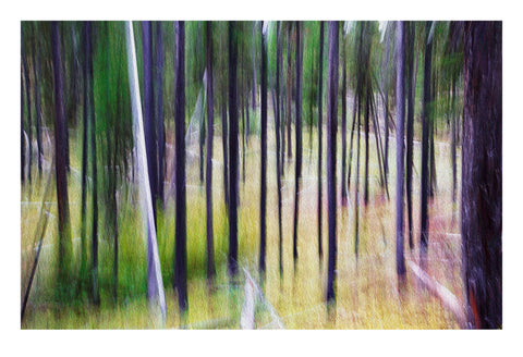 'Emerald Forest II' - Intentional Camera Movement