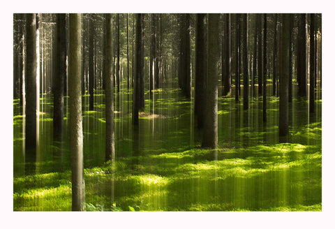 'Emerald Forest' - Intentional Camera Movement