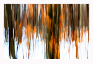 'Enchanted' - Intentional Camera Movement