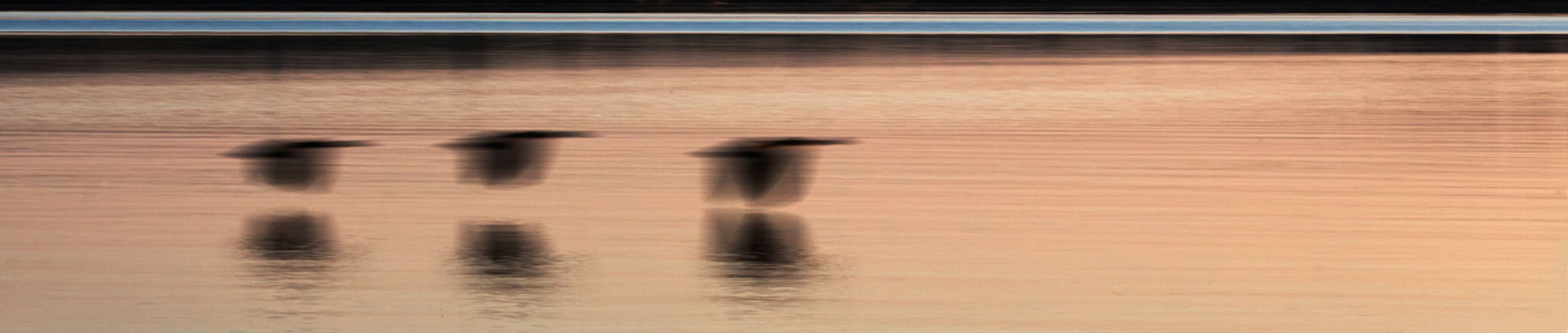 'Geese in Flight' - Intentional Camera Movement