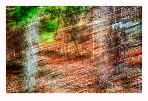 'Mysterious Woods' - Intentional Camera Movement