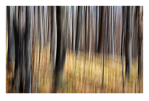 'The Forest' - Intentional Camera Movement
