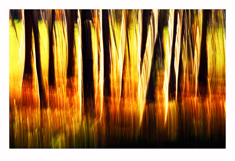 'Woods Behind My House' - Intentional Camera Movement