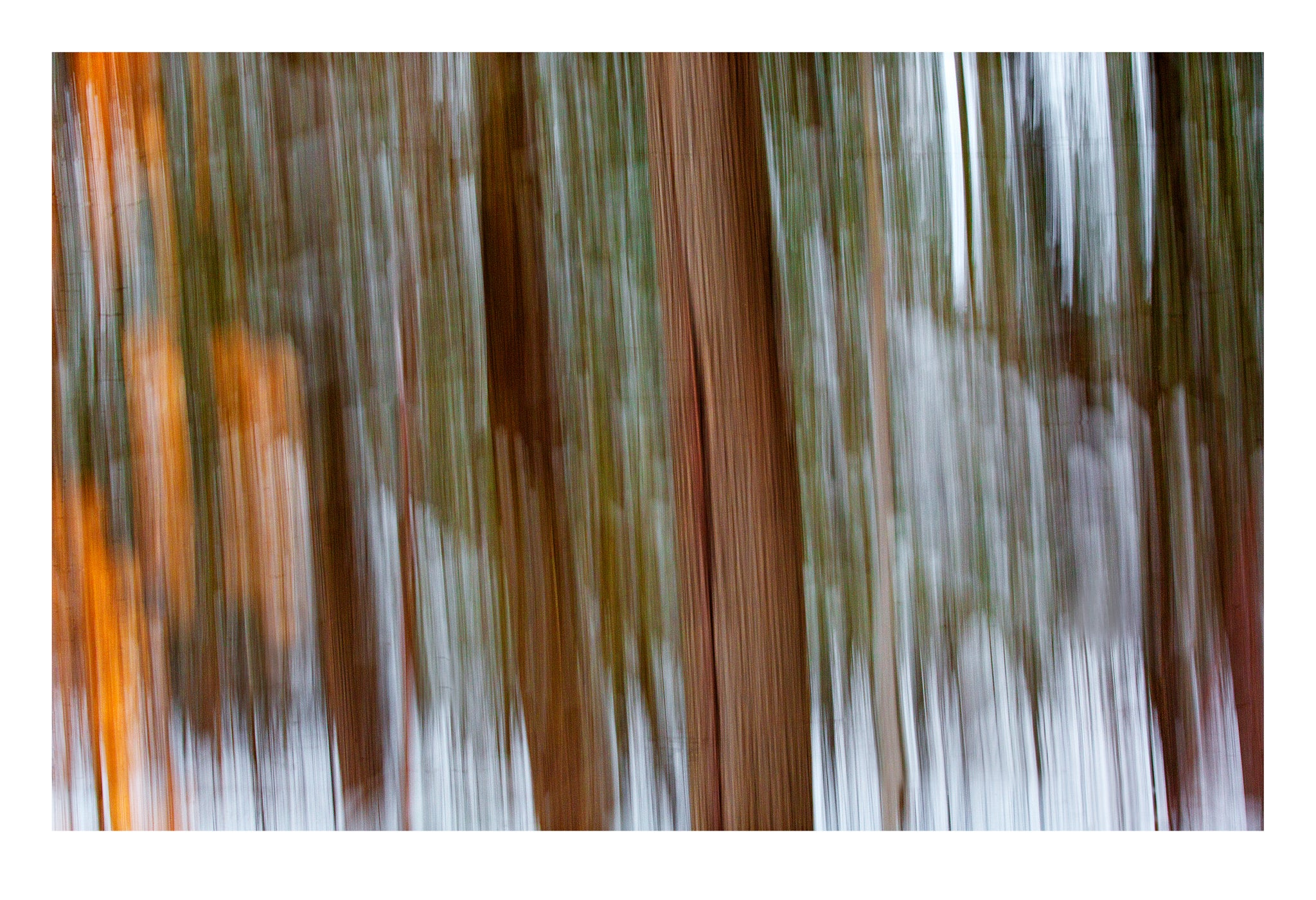 'Into the Woods' - Intentional Camera Movement