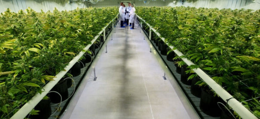 Carbon Dioxide Supplementation in Cultivation Facilities