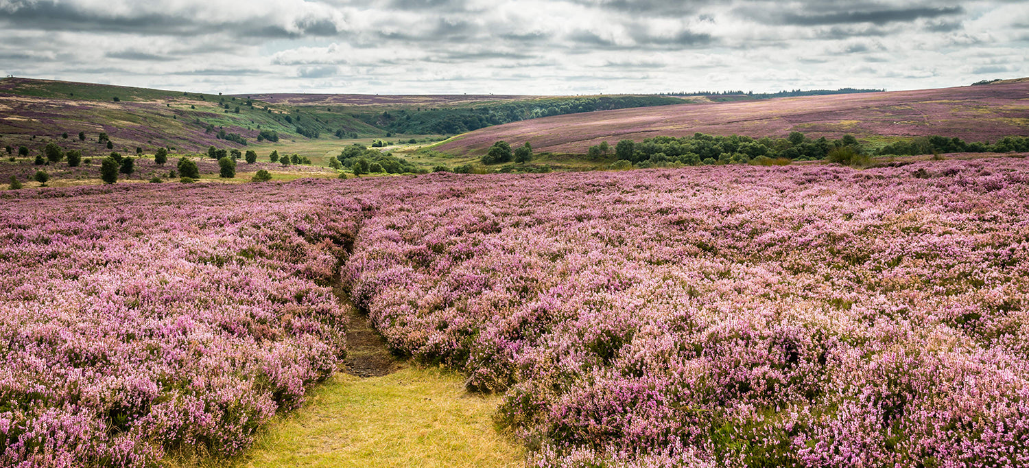 The Beautiful North Yorkshire Moors