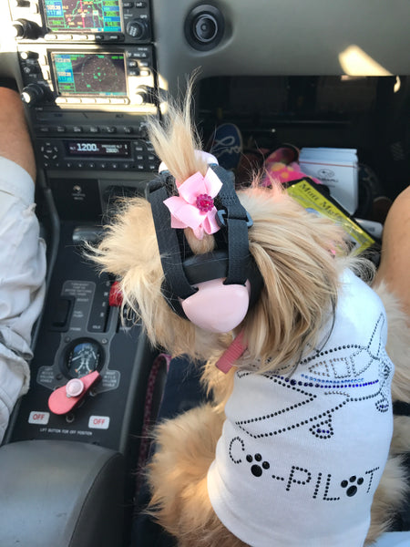 Noise Reducing Headsets for Dogs