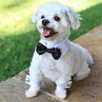 White Doggie Formal Cuffs