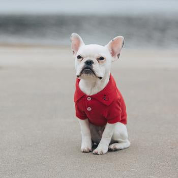 Solid Red Dog Polo