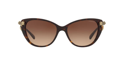 548574 - Dark Tortoise - Brown Gradient